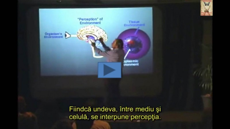 Workshop PSYCH-K Basic – Bucuresti, Timisoara, Bacau, 2016, 2017