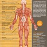 Oroian Ovidiu – Biorezonanta magnetica | Homeopatie | Fitoterapie | Nutritie – Alba Iulia, Aiud