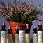 LIA RUCOI – Terapeut Bowen si Remedii florale Bach – Sighisoara si Odorheiu Secuiesc