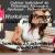 Workshopuri de orientare vocationala pentru adolescenti | octombrie si noiembrie 2014, Bucuresti